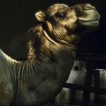 """Camel"" [Camelo], 2010"