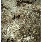 """""""Queimada"""", 2012, fotografia, queima de uma parte de coisas do arquivo do artista"""