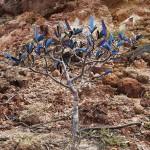 """Arbusto azul"", 2013, fotografia, 80x120 cm"