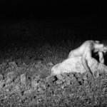 """Leito"", 2008, fotografia, DVD, objeto"