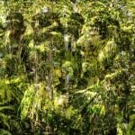 Amoahiki, Árvores do canto (xamânico) | 2008 | vídeo instalação