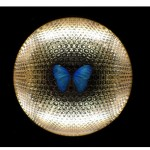"""Metamorfose"", 2012, pintura automotiva sobre marcenaria, lente 40mm, borboleta ""in natura"", espelhos, cromo, acrílico e lâmpadas fluorescentes, 64 x 63 x 14 cm"
