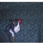 """""""Estou Fazendo Amor Com Outra Pessoa"""", 2012, óleo sobre tecido, 100x140 cm"""