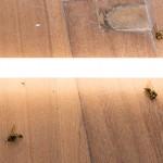 Sem título, 2015, deslocamento de lâmpada, cabos e vespas