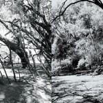 """""""O hidronauta"""", 2014, fotografia, dimensões variáveis"""